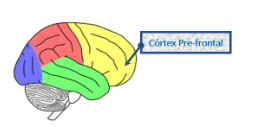 Córtex Prefrontal
